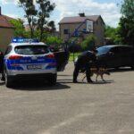 Akcja policyjna, zatrzymanie z psem - 3
